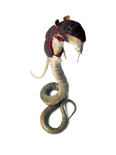 Die Schlange - als Räuber - ertarnt sich ihre begehrte Beute, 2001